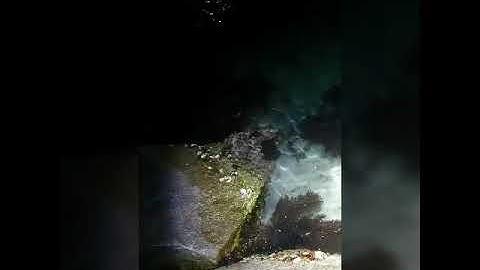 동해 워킹문어 야간 해루질 대왕피문어 사냥 성공  -  대박...🚘...🔥