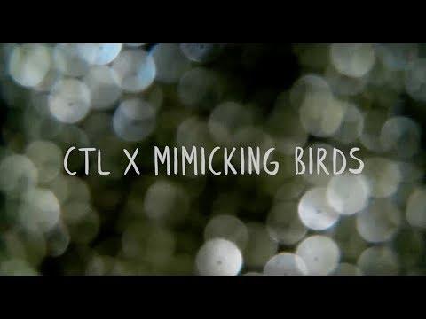 ctlxmimickingbirds