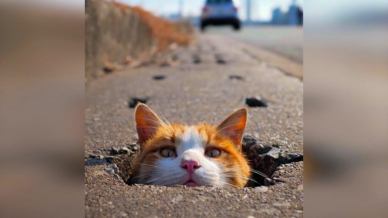 Днем святого, картинки смешные видео про кошек до слез