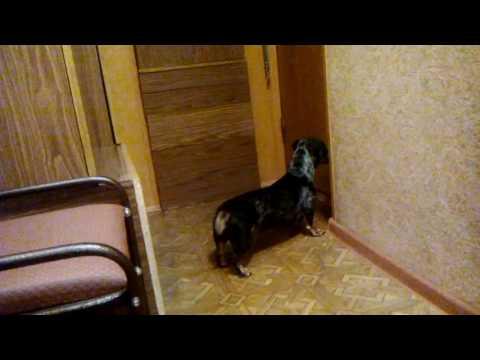 Позорная драка в Верховной Раде Украины - Видео