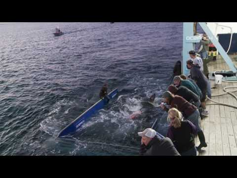OCEARCH video: Tagging Mary Lee