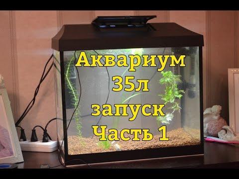Аквариумная рыбка астронотус содержание, совместимость