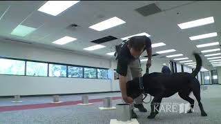 K9 training in explosive detection