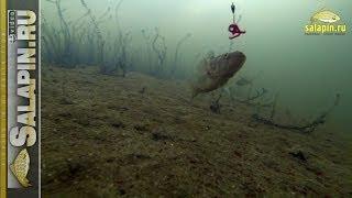Ловля ротана (подводное видео) [salapinru](Уникальная зима дала мне возможность выбраться на рыбалку на ротана, о которой я давно мечтал, да все никак..., 2014-01-17T07:29:01.000Z)