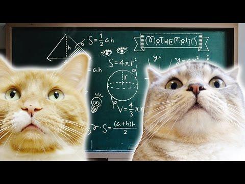 funny cat experiment - how to open box / 猫の学習能力を調べる実験【猫 おもしろ】