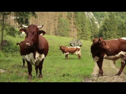 Sommer 2020 in St. Anton am Arlberg - Mit Abstand der beste Sommer from YouTube · Duration:  2 minutes 3 seconds
