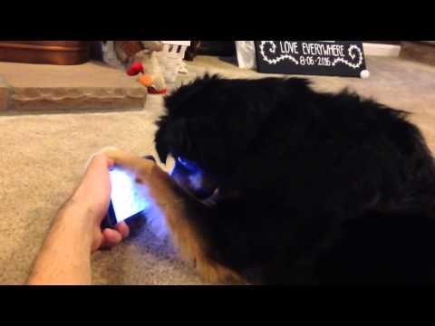 Dog watching video of dogs