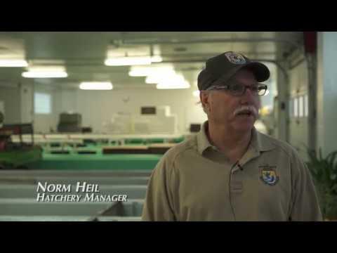 Radio Bristol Farm Report -  Erwin National Fish Hatchery