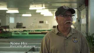 The ASD Farm Report - Erwin National Fish Hatchery - Erwin, TN