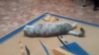 Чихает кот