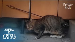 The Culprit Gives Chickens With Rat Poison To Remove Stray Cats | Animal in Crisis EP77
