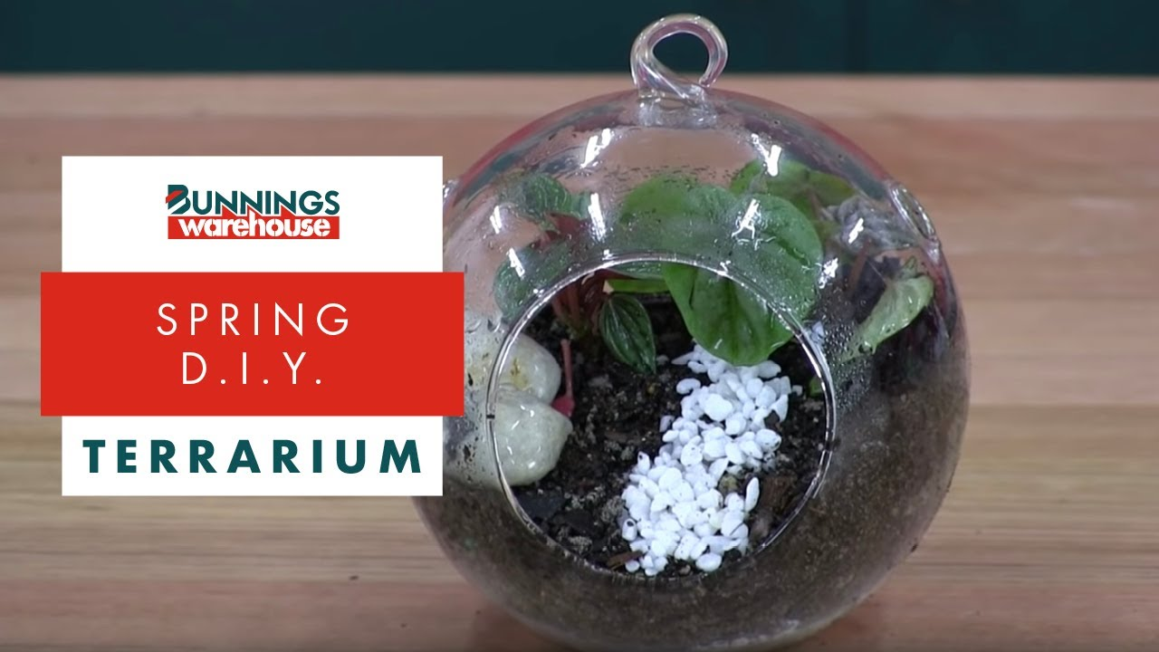 How To Make A Terrarium Diy At Bunnings Youtube