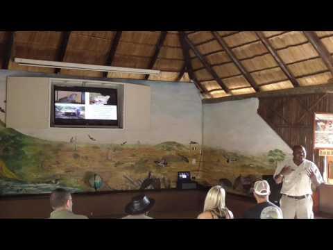 Introduction to Moholoholo wildlife rehab centre