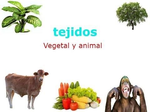 Tejidos vegetal y animal