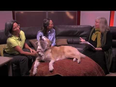 In The Studio - Alternative Veterinarian Medicine