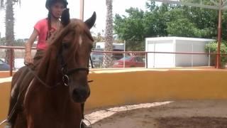 Ce cheval a été reversé par un camion