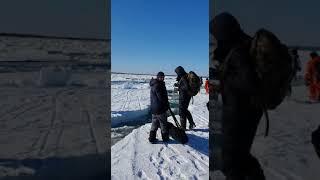 В заливе Мордвинова в районе «Свинарника» рыбаки пытаются выбраться со льдины