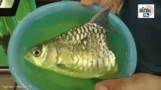 Chú cá còn nửa thân vẫn sống sót suốt 6 tháng