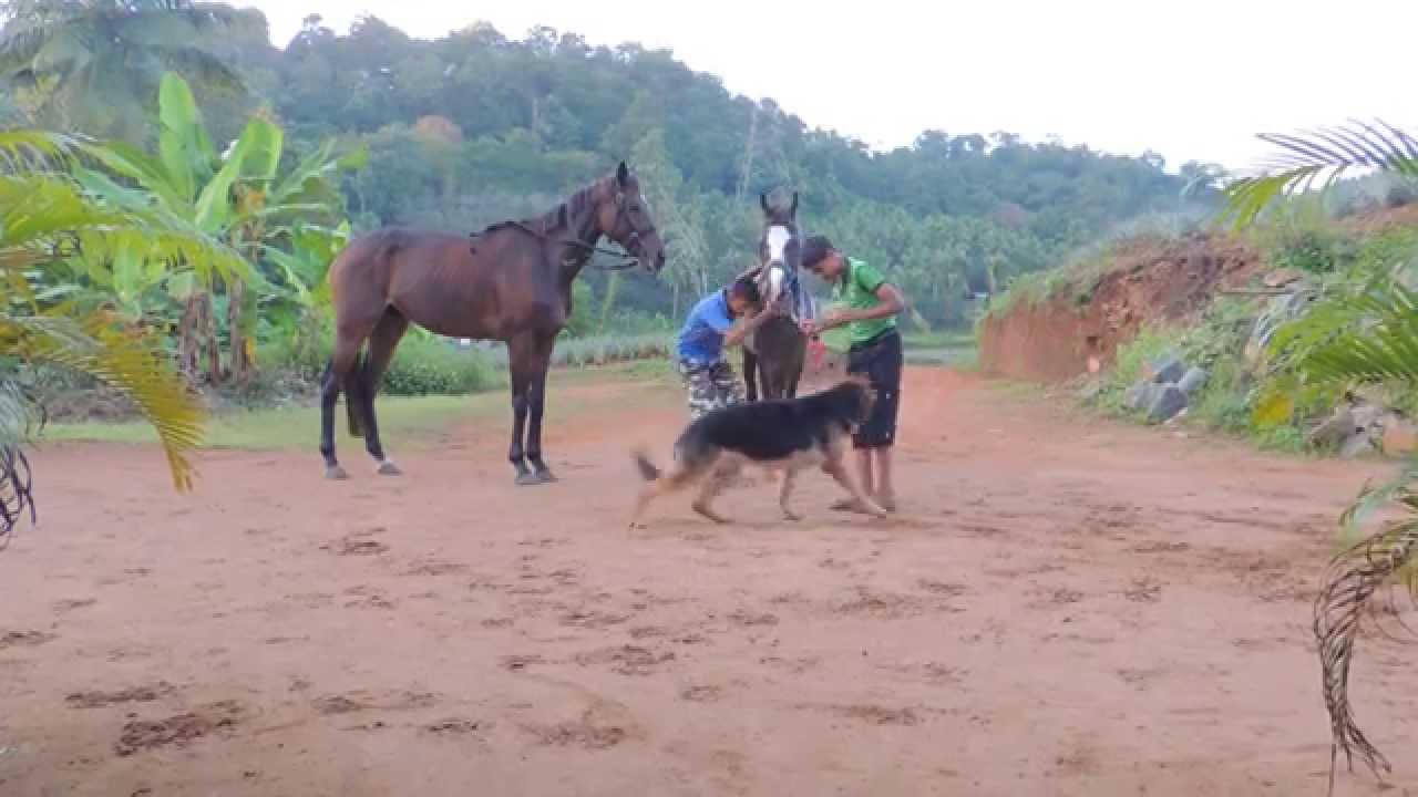 Stallion's Valley Horse Riding Academy kerala mb +919847400608