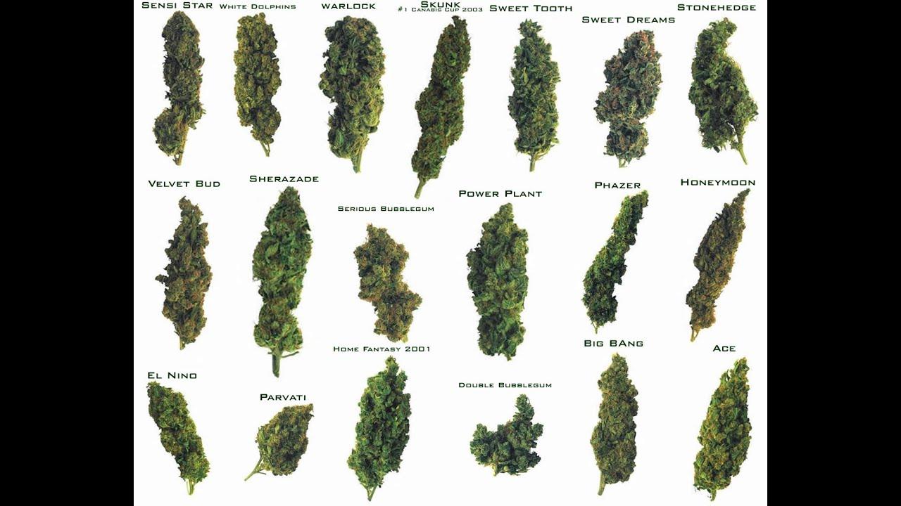 Marihuana 4 tipos mas potentes (Weed)  YouTube