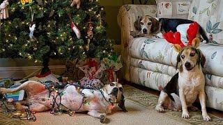 Dog vs.  Christmas (собаки против рождества)