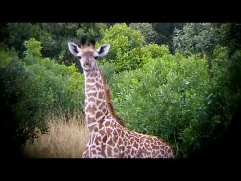 Journey to Africa -  Day 3 - Binocular Vision and STAMPEDE!