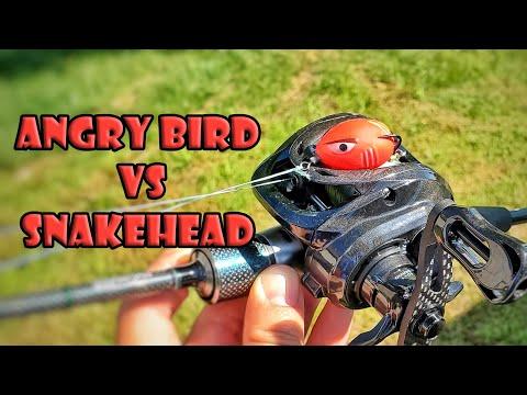 Snakehead Fishing Challenge Using Ultralight Tackle Angry Bird Frog Lure Tsurinoya Dark Wolf BFS
