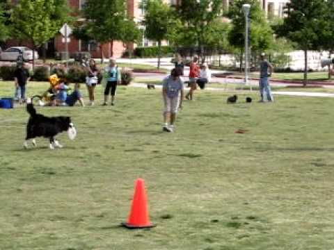 Austin Airdogz  Majors performance at KLBJ Dog Day afternoon
