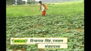 इस प्रकार करें अनार की जैविक खेती