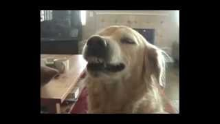 Funny Dog Video - Cutest Smiling Dogs Ever!