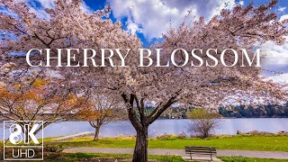 Blooming Tree - 8K Animated Wallpaper with Relaxing Piano Music - Cherry Blossom at Lakeshore screenshot 4
