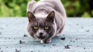 Смешные животные. Ну и кто царь природы )))