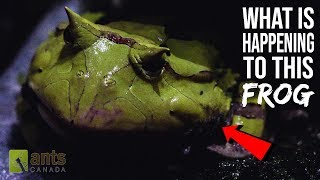 what-is-happening-to-this-frog-amazing-frog-skin