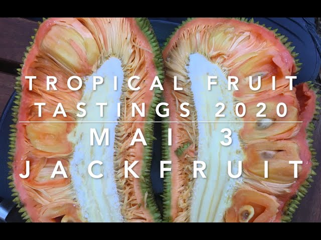 Mai 3 Jackfruit Tasting- Florida Tropical Fruit Tastings 2020