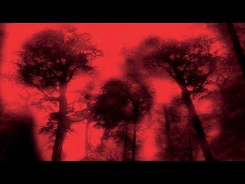 Official Trailer: Cabin Fever (2002)