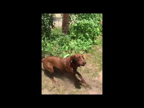 Kid Messes With Mean Dog And Gets Bit