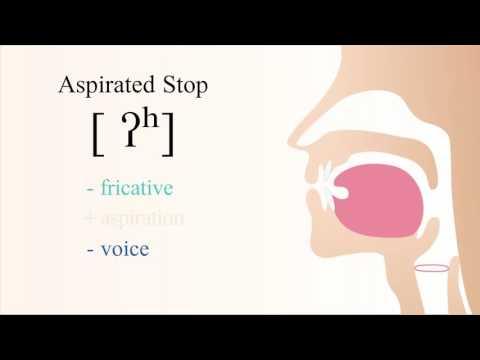 [ ʔʰ ] unvoiced aspirated radical glottal stop