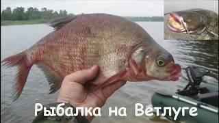 Рыбалка на Ветлуге.  Лещ и сомики