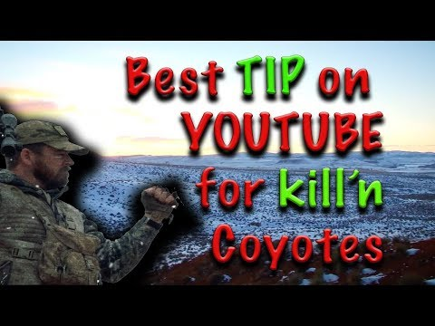 BEST Coyote Calling TIP ON YOUTUBE- Best Coyote Hunting and Predator Calling action, tips how to!