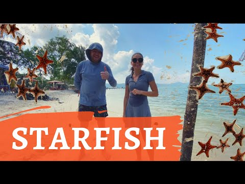 Пляж Starfish на Фукуоке или вьетнамский развод на 500 000 донгов на пляже с морскими звездами