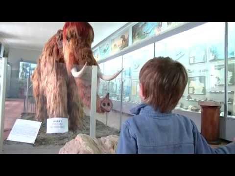 Музей динозавров. Экскурсия в Палеонтологический музей г.Киев