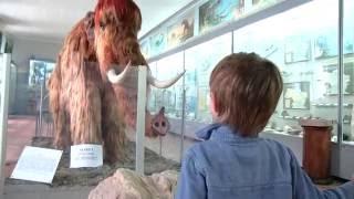 видео Палеонтологический музей им. Ю.А.Орлова