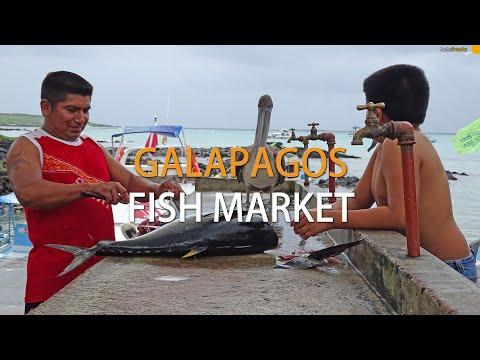 Fish market in Puerto Ayora