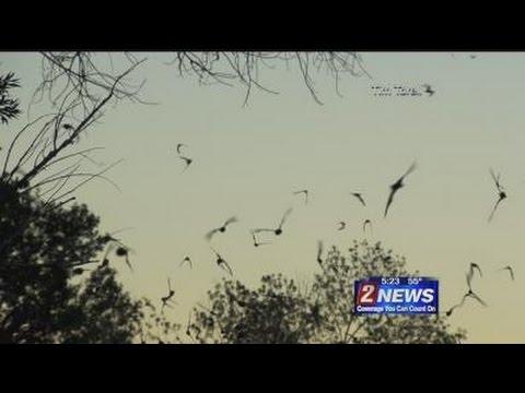 10/28 - 5pm - NDOW: Nevada's Bats Help Keep Area Bug Population Under Control