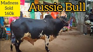 192 | Aussie Bull Goes Out of Control | Sold 160k | Gabtoli haat | Dhaka Diaries | ZbGH 2019
