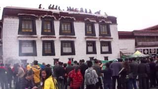 2011年5月11日と12日の映像です。 チベット仏教の総本山とも言われるジ...