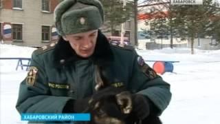 Вести-Хабаровск. Экзамен для собак спасателей