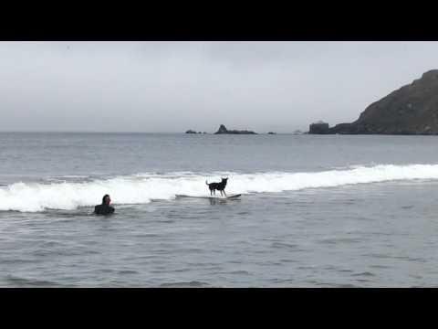 Abbie - Dog surfing championships 2017