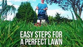 how to get the perfect lawn   way to grow   hgtv