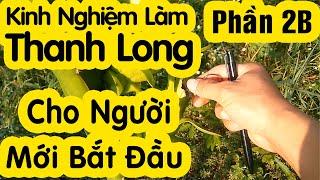 #2 Chia Sẻ Bí Quyết Làm Thanh Long Ruột Đỏ Trái Vụ - Mùa Đèn   Học làm Nông Dân